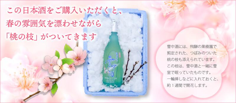 この日本酒をご購入いただくと、春の雰囲気を漂わせながら「桃の枝」がついてきます